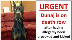 """https://www.change.org/p/ontario-health-services-appeal-and-review-board-spare-the-life-of-dunaj-the-downtown-doberman — URGENT PETITION: Spare the life of Dunaj the """"Downtown Doberman"""""""