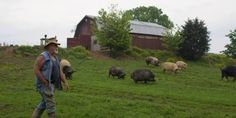 This Pig Preserve In Tennessee Shows How Pigs Should Live