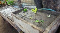 Jardín huerta para hortalizas y frutas.