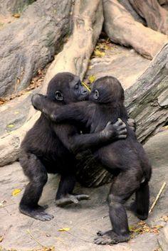 Brutal hugs