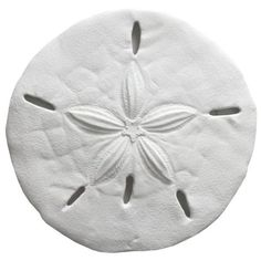 Fetco Home Decor White Sand Dollar Decor ($13) ❤ liked on Polyvore featuring home, home decor, filler, white, white home accessories, fetco home decor and white home decor