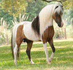 Miniature stallion