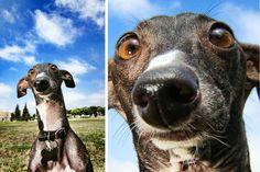 Seth Casteel dogs on land!