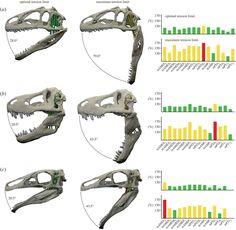 Bite angles for Allosaurus, Tyrannosaurus, and Erlikosaurus. From …