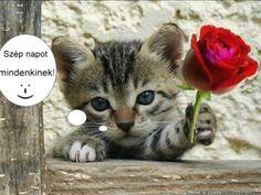 Good Morning Quotes, Cats, Animals, Bracelets, Youtube, Gatos, Animales, Animaux, Animal