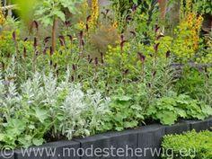 Winnaar The Great Chelsea Garden Challenge: Greening Grey Britain Voortuin Design: Sean Murray Chelsea Flower Show2015 overig Copyright Modeste Herwig