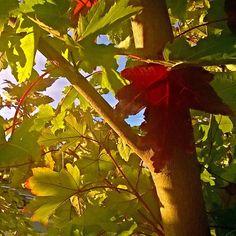 Mel's leafys