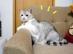 寝る猫のはなし うにオフィシャルブログ「うにの秘密基地」Powered by Ameba