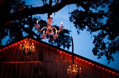 Chandeliers hung in trees at Annadel