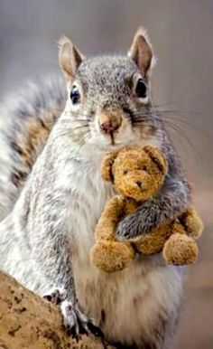A squirrel with a teddy bear. Oh my goodness!