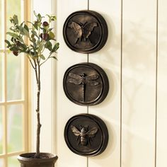 Set of 3 Entomology Plaques - Butterfly Plaques - Bee Plaques - Dragonfly Plaques at Ballard Design Oui Oui, All Wall, Ballard Designs, Wall Plaques, Wall Signs, Home Accents, Just In Case, Home Accessories, Wall Decor