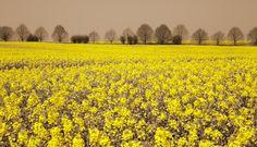 """Rapsody"" in yellow"