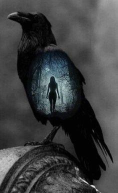 Dark Fantasy Art, Fantasy Kunst, Dark Art, The Crow, Crow Art, Raven Art, Corvo Tattoo, Mountain Ash Tree, Bel Art