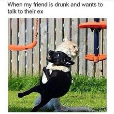 I fucking love when animals do people stuff. Like imagine a dog wearing sunglasses and boogieboarding ahahahaha it's just great