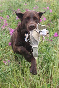 Hunde Foto: Anne und Carlos - Dummytraining Hier Dein Bild hochladen: http://ichliebehunde.com/hund-des-tages  #hund #hunde #hundebild #hundebilder #dog #dogs #dogfun  #dogpic #dogpictures