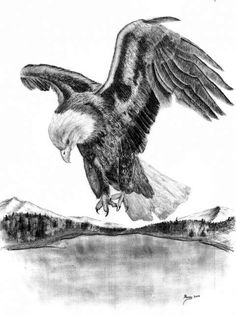 Cool Drawings Of Eagles and Drawings Of American Bald Eagles | Charcoal Drawing Fly Drawing, Eagle Drawing, Eagle Sketch, Charcoal Drawing, Gate Design, Cool Drawings, Sketches, American, Bald Eagles