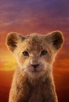 """Yes, we know, """"live-action"""" seems a stretch for Jon Favreau's remake of the animated Disney classic The Lion King, but that's what Disney is calling it. Simba Disney, Disney Lion King, Lion King Art, Lion King Movie, Simba Et Nala, Le Roi Lion Film, Watch The Lion King, Lion King Pictures, Disney Live"""
