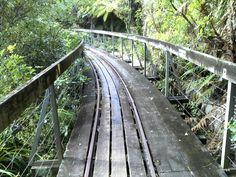 Tramway bridge on Waitakere Tramline Walk.