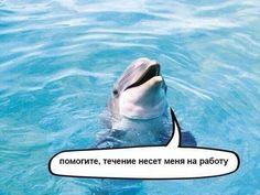 Течение несет меня на работу ))
