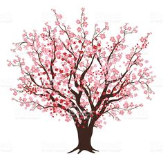 Pink And Red Cherry Blossom Tree In Full Bloom royalty-free stock vector art