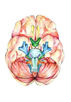 Watercolour Anatomy Art Brain and Cranial Nerves