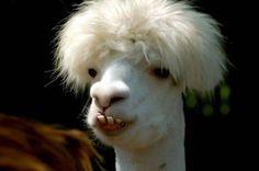 animais engraçados (1)   por lfcontato