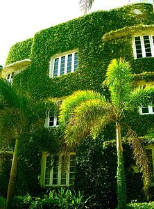 Photograph - Natural Ivy House by Monique Wegmueller