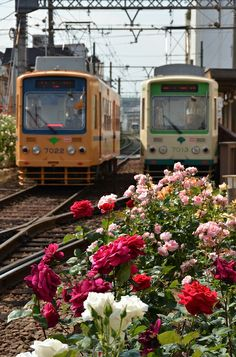 下町のバラ電車| ウーマンエキサイト みんなの投稿