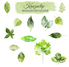 Watercolor Leaves Set by Kaazuclip on @creativemarket