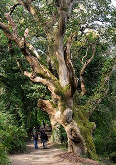 Caminhada pela floresta. Santo Austell, Inglaterra, Reino Unido.