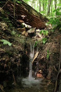 lori-rocks:  Overflow..small forest stream