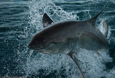 Magnificent: The marine biologist has been in South Africa since late 2012, and has captur...