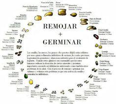 Remojar y germinar las semillas.
