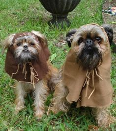 Ewok Costume for dogs...for Spartacus!!!