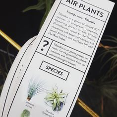 Air plant care guide from Elsje Designs.