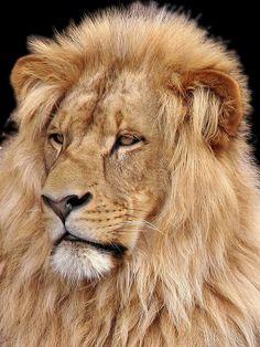 Receita anuncia nova versão de aplicativo do Carnê-Leão