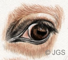 Draw and Paint Horses' Eyes: The Whites of the Eyes