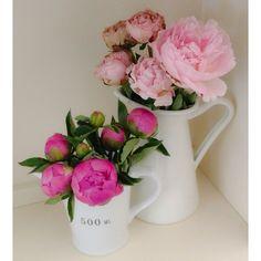 Peonies ~ pink flowers peony