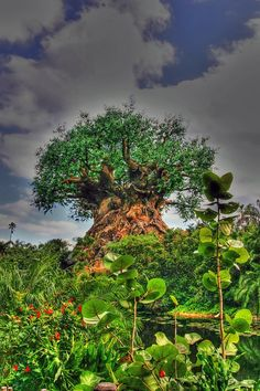 """""""Tree of Life"""" It's a mystical tree in India or Africa.: NOPE - It's a fake tree at Animal Kingdom at Disney World in Orlando, Florida."""