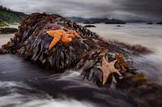 Ecola State Park & Starfish by The Flannel Photographer (flannelphotographer.com, via Flickr