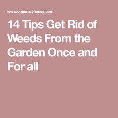 14 Tips Get Rid of Weeds From the Garden Once and For all