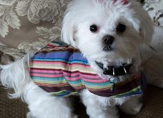 Mia  Maddie Designs: Free Online Pattern: Resizable Dog Coat (to sew)