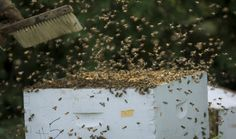 Going wild could improve winged workforce | MSUToday | Michigan State University