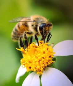 bee hives   Why bees might save the world (a.k.a. The buzz about bees)   Try Nerdy