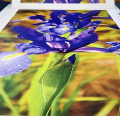 #selfadhesivewallpaper #phototex #murals Self Adhesive Wallpaper, Murals, How To Remove, Spring, Plants, Pictures, Photos, Wall Paintings