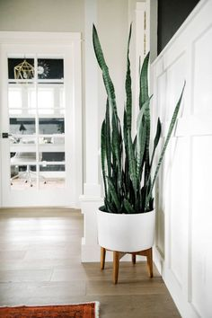 Like this for the corner of kitchen dining area by the window/counter. Snake plant in West Elm Planter | One Room Challenge