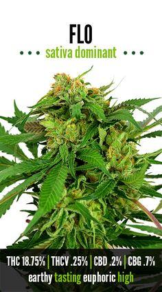 Flo | Repined By 5280mosli.com | Organic Cannabis College | Top Shelf Marijuana | High Quality Shatter