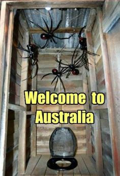 So, what you waiting for? | 19 Reasons Why Arachnophobes Should Give Australia A Miss