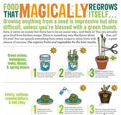 Growing Vegetables Indoors  Join us at Health & Wellness for motivation, support, tips and MORE! https://m.facebook.com/groups/339480739517601