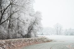 Free Image: Field and Trees Covered in Hoarfrost | Download more on picjumbo.com!